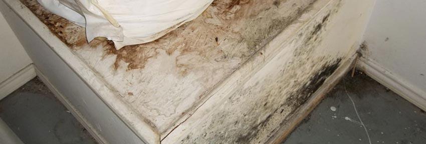 Mold Removal In Sheridan And Buffalo Wyoming